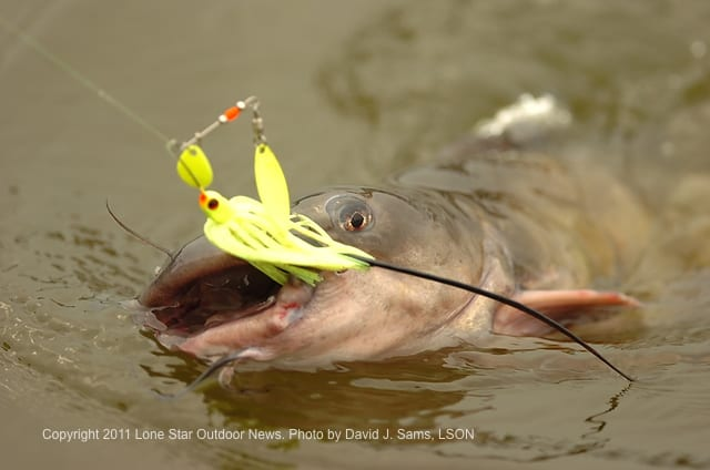 083111_Catfish_for_website_cromped