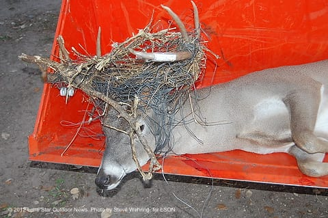 wire head buck losses fight with fence texas hunting Big Buck Wallpaper Big Money