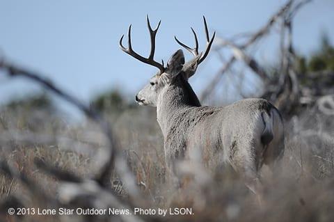 Mule deer hunters should bring bucks to check stations –