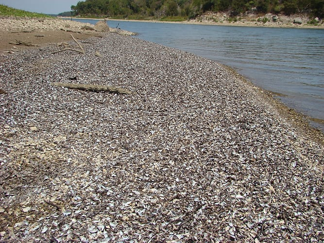 New zebra mussels regulations for texas boaters for Texas freshwater fish limits