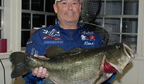 Fork bass