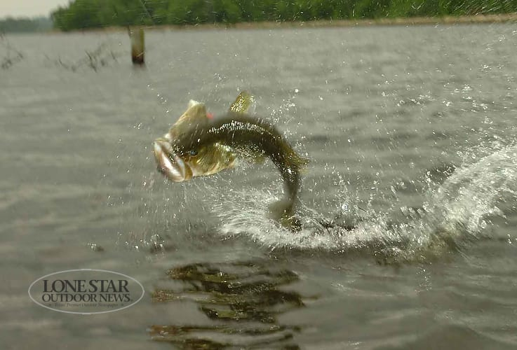 texas has three of top 10 bass lakes in country texas