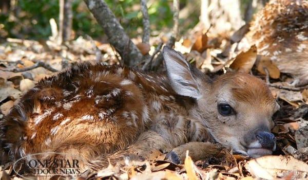 Wildlife shot from James Richards sent june 2013son of dave richards