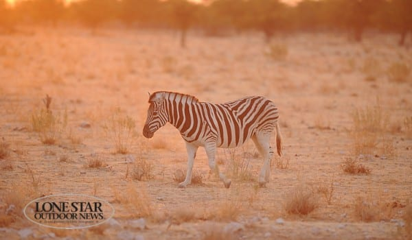 Hunting in Namibia Africa with Thormahlen and Cochran Safaris