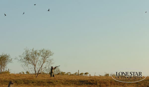Outlook good for Texas dove and early teal seasons - Texas Hunting ...