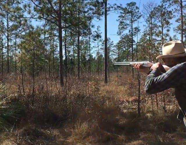 Experiencing some vintage Georgia bobwhite quail hunting. Excellent covey flushes at #pinehillplantation.