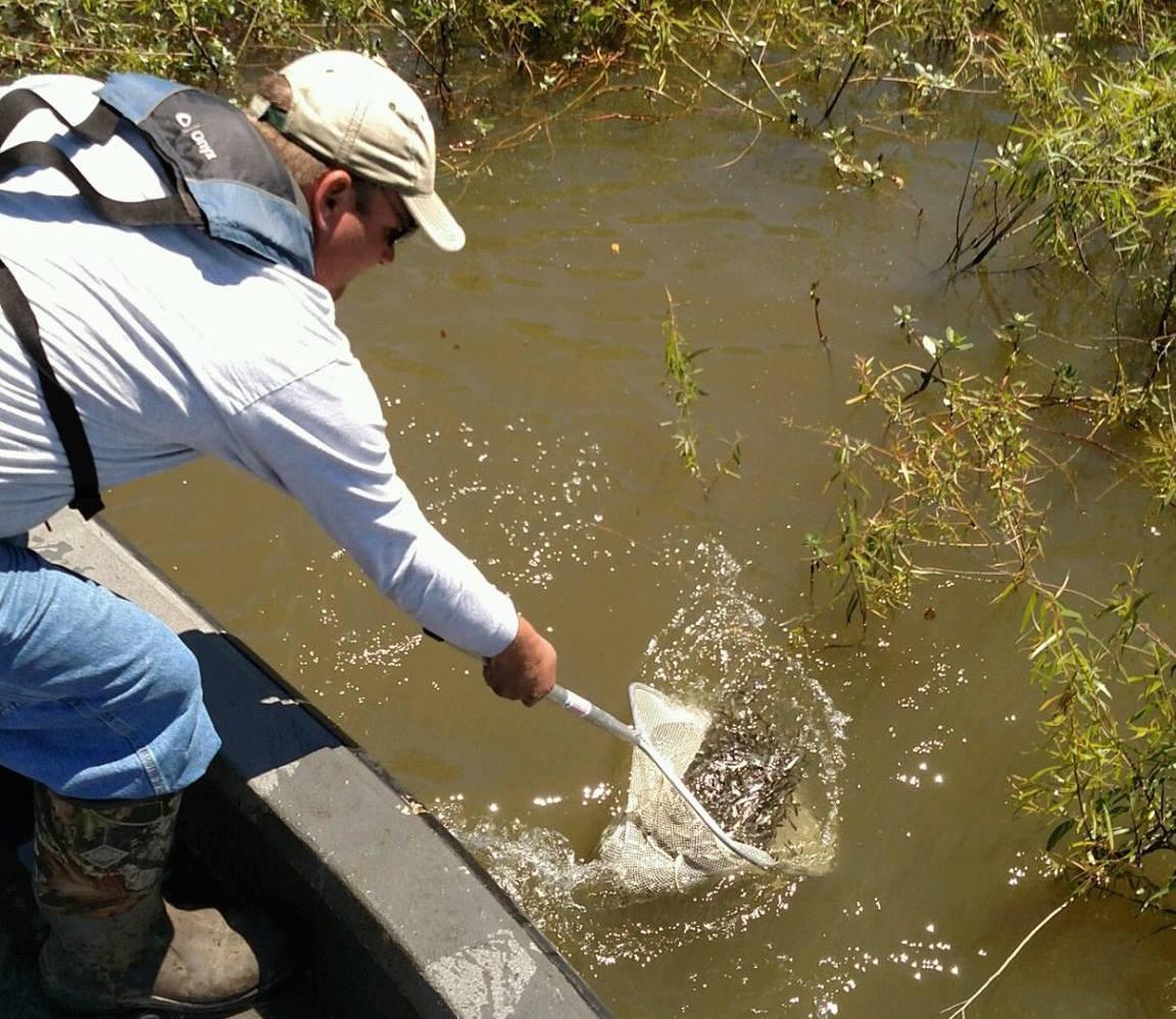 Fishing bass stocking in texas lakes for Fish stocking texas