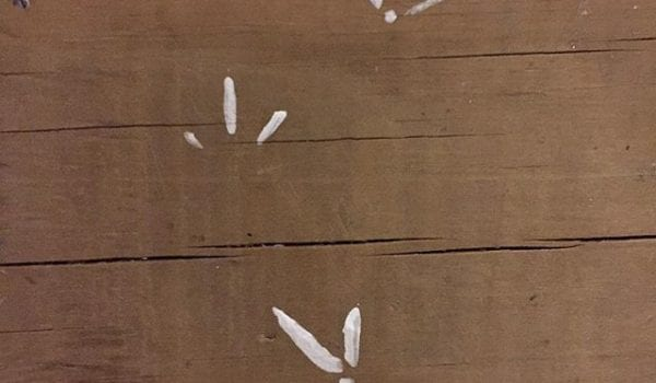 Foot prints on the dock. It did not step in paint.