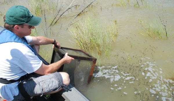 After long dry spell ray roberts to be stocked with for Lake ray roberts fishing report