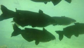 Rains boost Texas lakes, fish stocking –