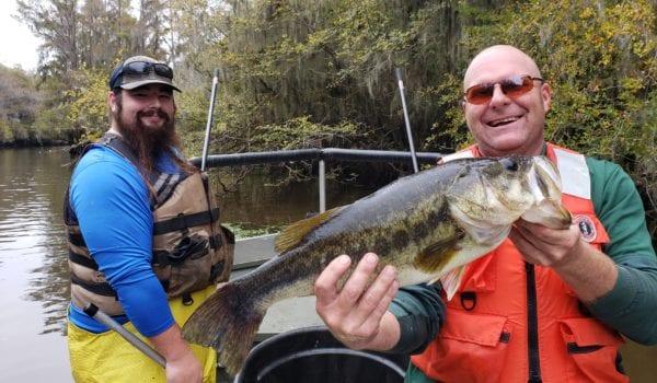 High Largemouth Numbers Found During Electrofishing Surveys